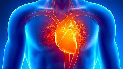 corazón fuerza esternón pericardio